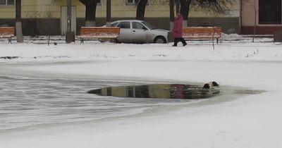Niemand wollte dem Hund, der in eisigem Wasser gefangen war, helfen