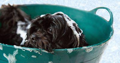 Diese genialen Tricks sollten alle Hundebesitzer kennen