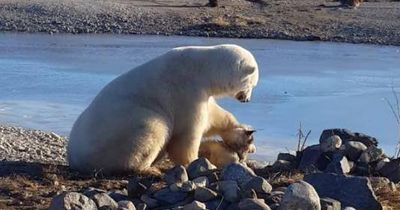 Hier streichelt ein Eisbär einen Hund
