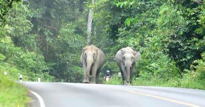 In einem exotischen Nationalpark traf er auf eine Herde gigantischer Wildtiere