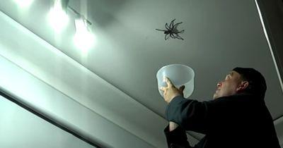 """Das passiert, als er eine Spinne """"vorsichtig"""" einfangen will"""