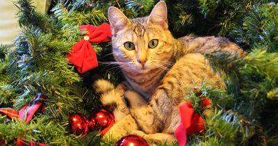 Die schönsten Weihnachtswerbungen für Tierliebhaber