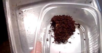 Bauer entdeckt eine der seltensten Gruselspinnen der Welt