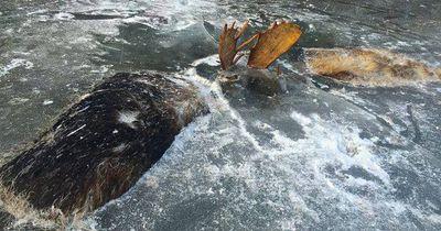 Zwei Elche gefunden: Hier muss sich Schreckliches zugetragen haben