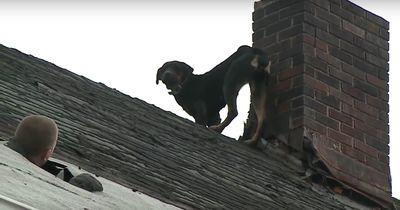 Drei Tage lang saß der Rottweiler unbemerkt am Dach fest