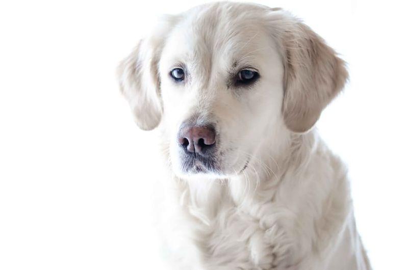 Haben Hunde einen Bauchnabel?