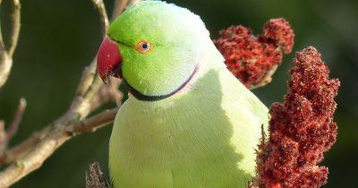 Hausmeister aus Düsseldorf mauerte hilflose Papageienküken ein