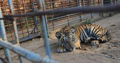 Diese Zoos sollten endlich geschlossen werden!