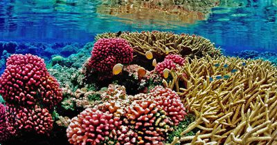 Australiens Great Barrier Reef erlebt schlimmste Bleiche überhaupt