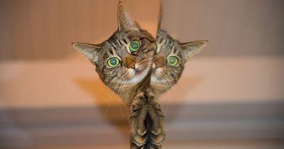 Diese Katze verursachte einen Schaden von 30.000€