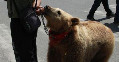 Dieser 'Selfie-Bär' muss nie wieder an der Kette sein