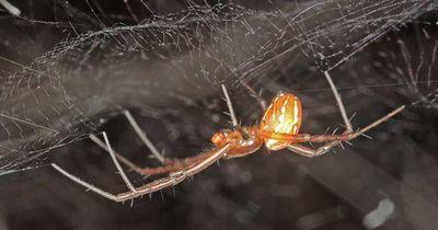 So ziehen Spinnen ihren Nachwuchs auf