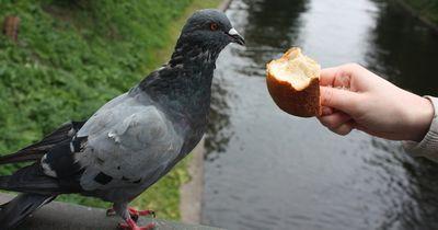 Diese Strafe droht einem, wenn man in Nürnberg Tauben füttert