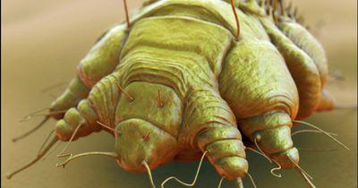 Diese Parasiten breiten sich wieder in Deutschland aus