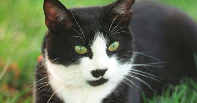 Diese Katze führt ihren eigenen Salon