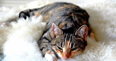Deshalb solltest Du Deine Katze öfter zum Schnurren bringen