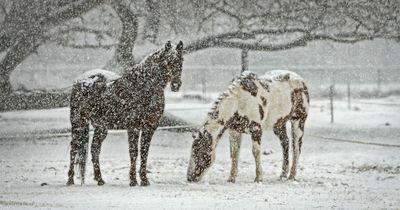 Irrglaube vom Tisch gefegt: Tiere frieren im Winter nicht