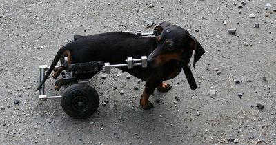 Wann lohnt sich eine Krankenversicherung fürs Tier?