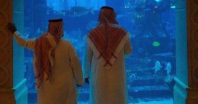 Arabische Scheiche dürfen diese Tieren ab sofort nicht mehr jagen