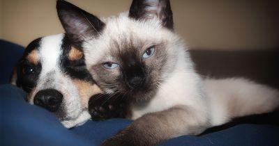 Wie überfürsorglich verhältst du dich deinem Haustier gegenüber?