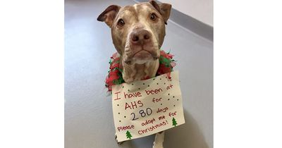 Dieser Hund hat zu Weihnachten nur einen einzigen Wunsch