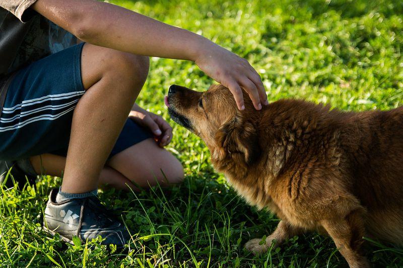 So lobt man Hunde richtig