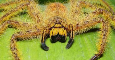 Schreck in der Spinnen-Ausstellung