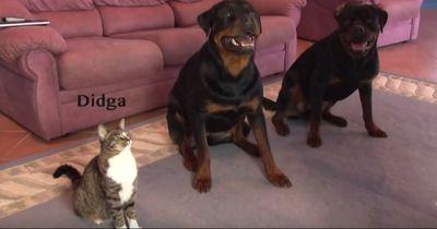 Sie beweist, dass auch Katzen coole Tricks lernen können