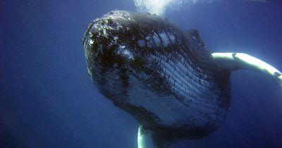 Das tat die Familie, als sie einen Buckelwal im Fischernetz entdeckte