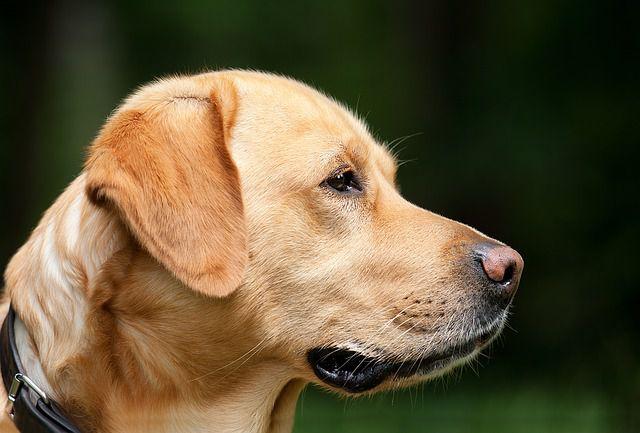 Hundekrankheit Rätsel
