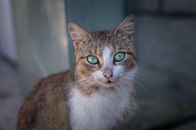 Katze wurde vor dem Hungertod gerettet