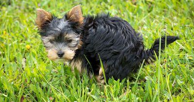 6 Haustier-Hacks, die jeder Haustierbesitzer kennen sollte