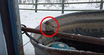 Dieser Vogel ist fest gefroren. Um ihn zu befreien, kommt sein Retter auf eine clevere Idee!