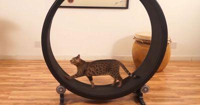 7 Sachen, die deine Katzen unbedingt haben will