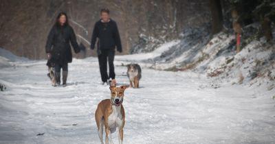Nach Scheidung: Paar streitet um Sorgerecht der Hunde