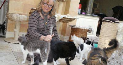 Diese Frau nahm 122 Katzen bei sich auf