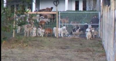 Nachdem er 45 Tierheim-Hunde adoptiert, tut er etwas Grandioses für sie