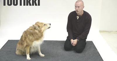 Das passiert, wenn man seinen Hund anbellt