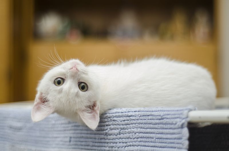 Katzen Umsonst