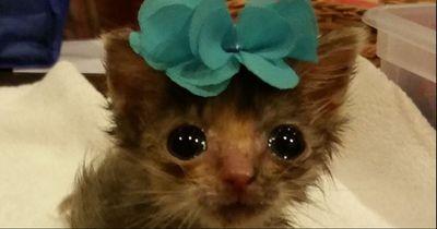 Dieses Kätzchen will einfach nicht wachsen