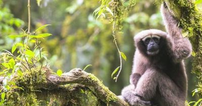 Neu entdeckte Affenart nach Star Wars-Figur benannt