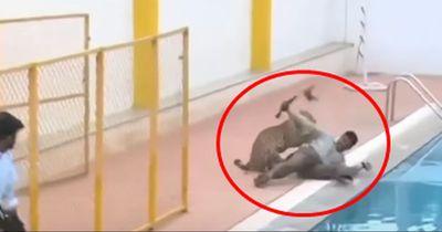 Leopard stürmt in Schule und verletzt sechs Menschen
