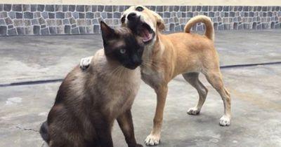 Hassen sich Hunde und Katzen wirklich?