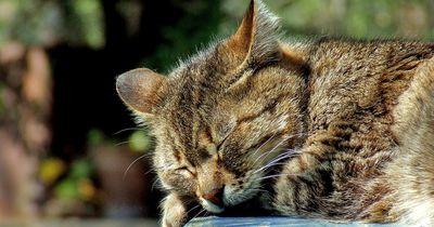Die schlimmsten Bemerkungen zum Tod einer Katze