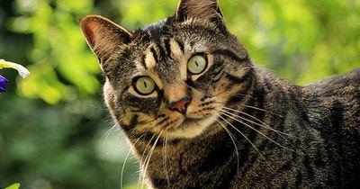 Warum starren Katzen in die Luft?