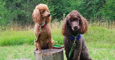 Außergewöhnliche Hunderassen, die kaum jemand kennt