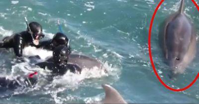 Diese Delfin-Mutter kämpft um ihre Kinder