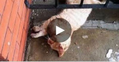 Als er eine halb erfrorene Katze auf seiner Veranda findet, zögert er nicht