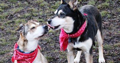 Diese Hunde suchen dringend ein Zuhause