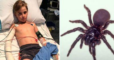 Junge überlebt Biss der tödlichsten Spinne der Welt